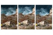 2_photographil-com_7-10